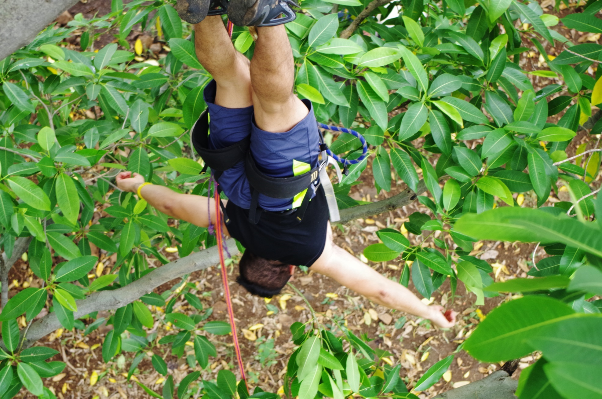 alcaldia, cooperation, internationale, el salvador, sonzacate, tree climbing