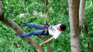 cooperation, internationale, el salvador, sonzacate, tree climbing